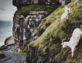 Wales-Rally-GB-2019_Attila-Szabo_0185